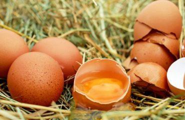 For  Incredible Egg