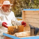 Beekeeping Plans Ideas