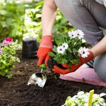 Beatify Your Garden